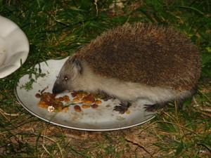 Ale veď hej, chyba sa môže stať, ježovia by vedeli rozprávať. Ale videli ste, aby jež liezol na kefu znovu a znovu? Dobrovoľne?