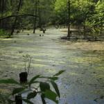 Pražská divočina